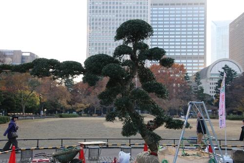 10 匝瑳市植木職人の作品