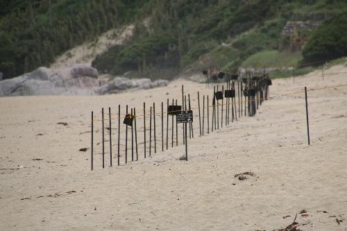 永田いなか浜の海亀が産卵した卵がある場所を示す標識