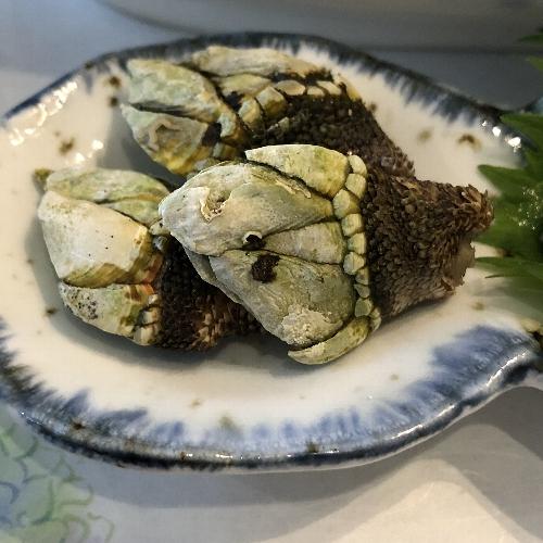 屋久島グリーンホテルの亀の手