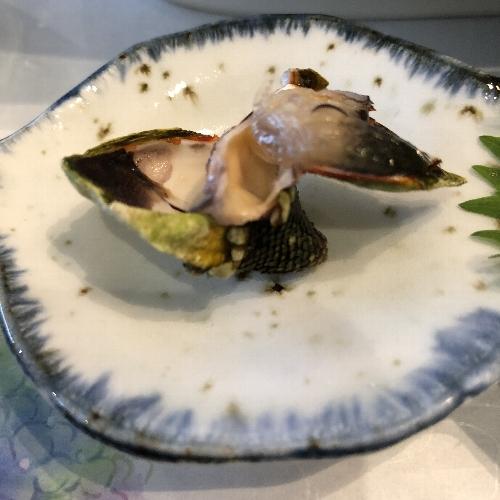 屋久島グリーンホテルの亀の手を開いたところ