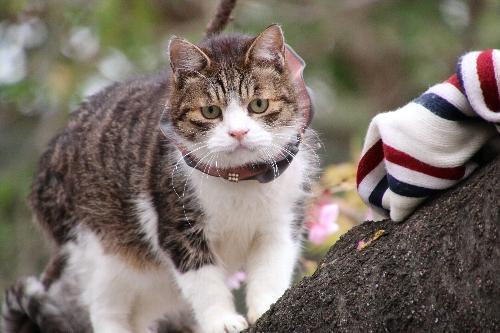 上野動物園の猫