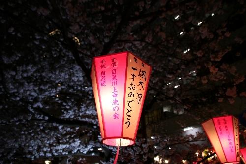目黒川の夜桜ぼんぼり