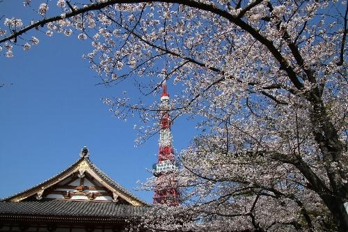 増上寺と東京タワーのとりあわせ