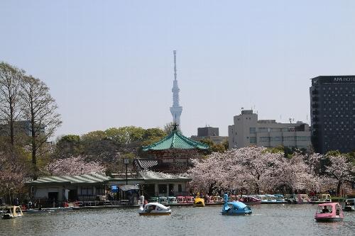 弁天堂の周りに桜