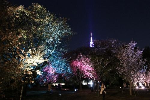 ライトアップされた関山、一葉と代々木のドコモタワー