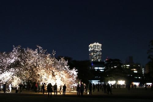 富久クロスコンフォートタワーとライトアップされた桜