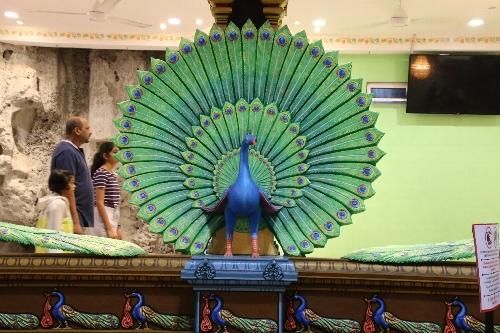 孔雀も神聖な存在