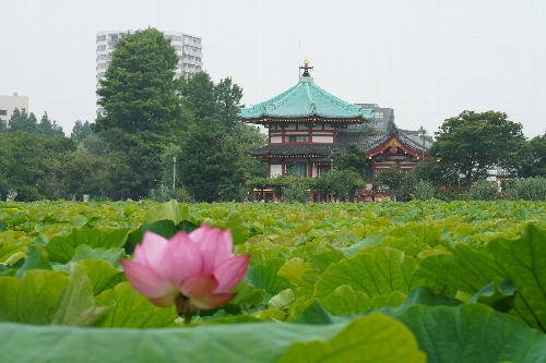 不忍池の弁天堂と手前の蓮の花