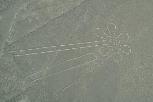 6花弁の花