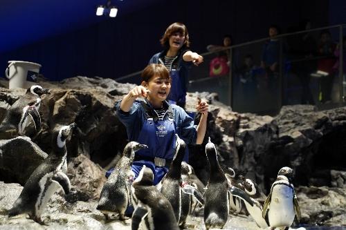 ペンギンに餌をやる飼育員さんたち