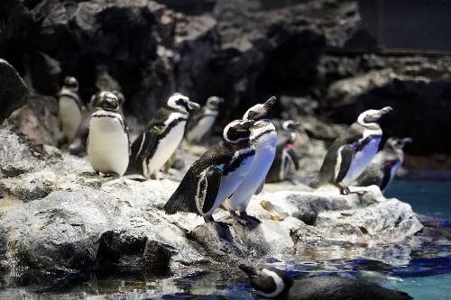 突き出した陸地にいるペンギン