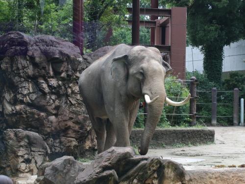 象は撮りやすい