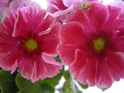 ぬくもりカフェの花
