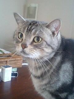 お母さんより猫シッターさんが好きかも