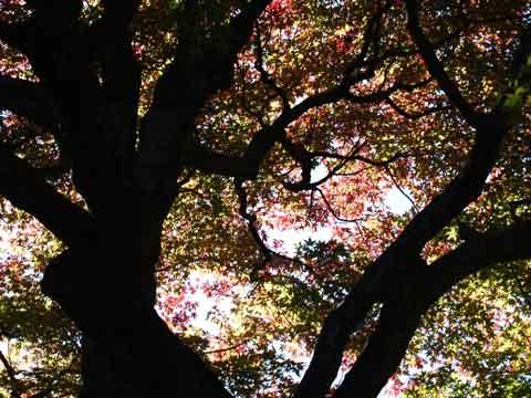 縁切り寺の紅葉