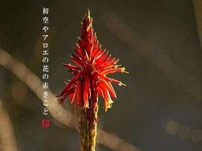 アロエの花アップ