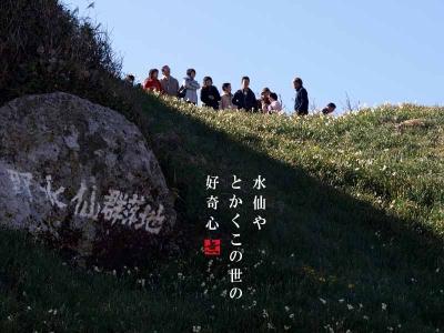 野水仙と観光客