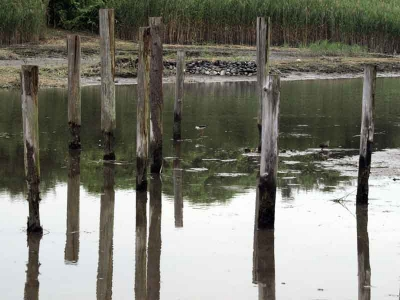 野鳥園の干潟