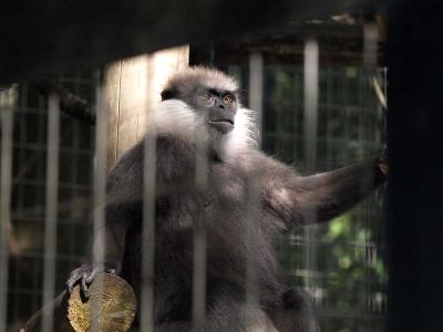 ポーズをとる猿