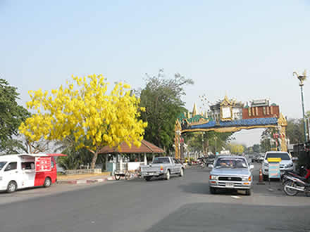 タイの国花