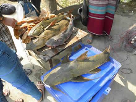 道端の魚売り