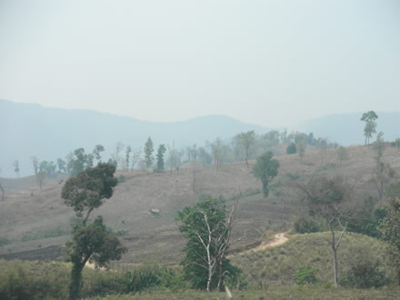 モン族の畑