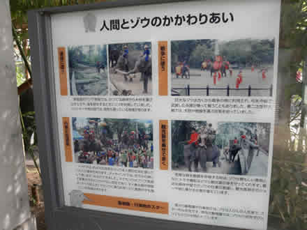 上野動物園とゾウ使い