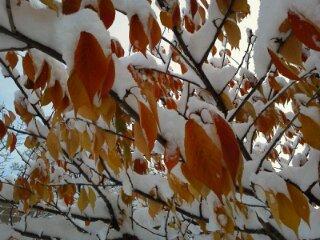 初雪の次の日