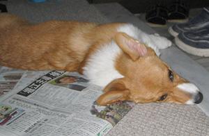 新聞が好き