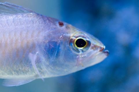 魚の目.jpg