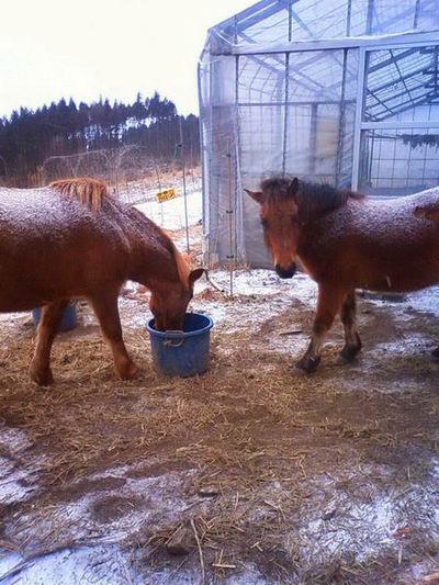 2011Jan 農場馬.jpg