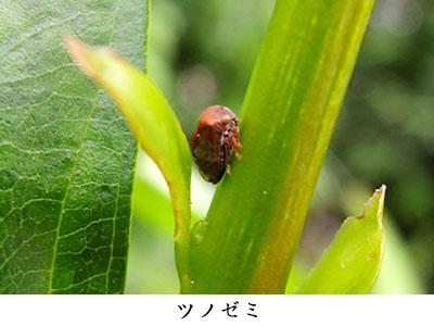 41_09.jpg