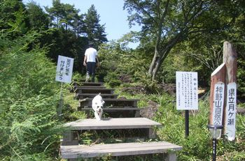 神野山を登るmimi