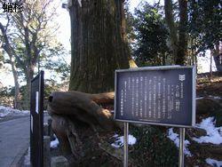 takosugi