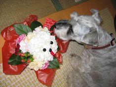 mimi&flower