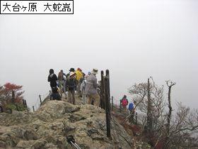 0911 daiygaura