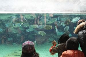 天王寺動物園の水槽