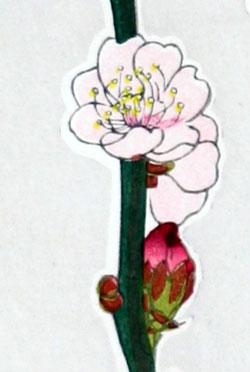 葛原輝「豊後梅」木版画一部拡大