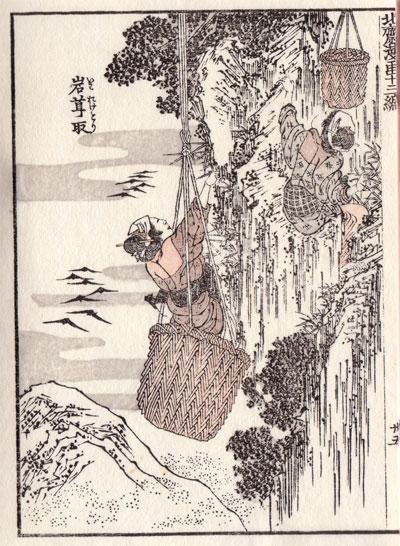 北斎漫画十三篇:岩茸取(いわたけとり)