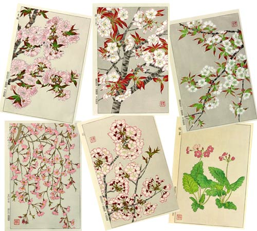 桜の木版画いろいろ