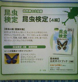 昆虫検定 4級 練習問題