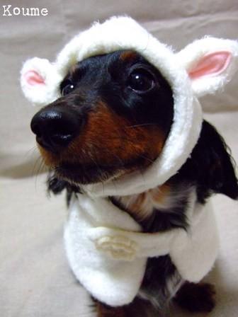 子羊小梅っち。