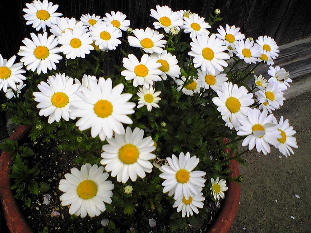 花の画像 p1_13