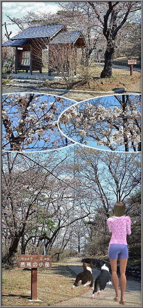 安積山公園の桜 | 一心の福島探...