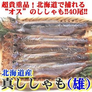 【超レア】北海道で捕れる貴重なオスししゃも 40尾