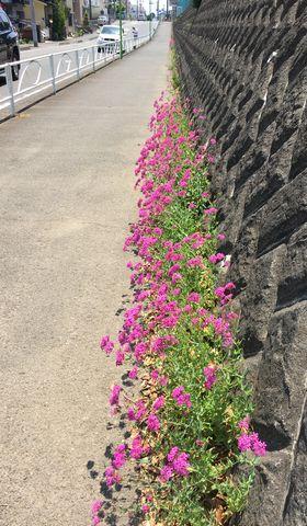 170521_flowers_01