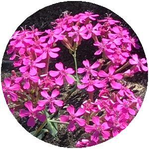 170521_flowers_02