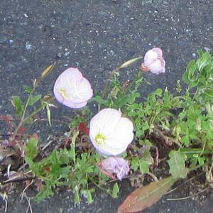 170523_flowers_07