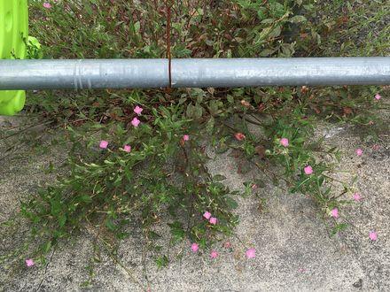 170525_flowers_04