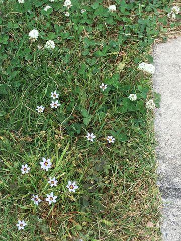 170525_flowers_09